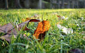 Le foglie e il vento