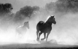 Su quale cavallo politico puntano i padroni?