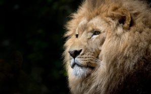 Giorni da leone