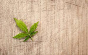Cannabis light store, l'ultima frontiera del proibizionismo