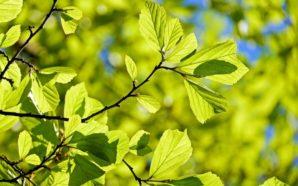 Cambia il clima in Baviera, successo dei Verdi in 10…