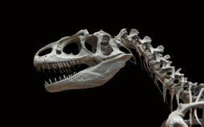 I dinosauri del nostro tempo