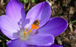 Tristi favole moderne: storia di un'ape e di un clochard